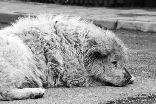Dog, Bucharest, Romania stock photo