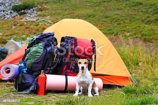 istock Dog camping 487649012