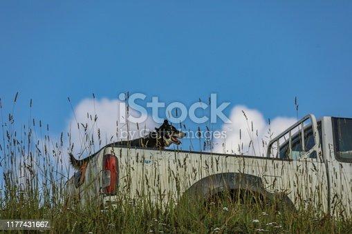 Chien voiture Savoie montagne