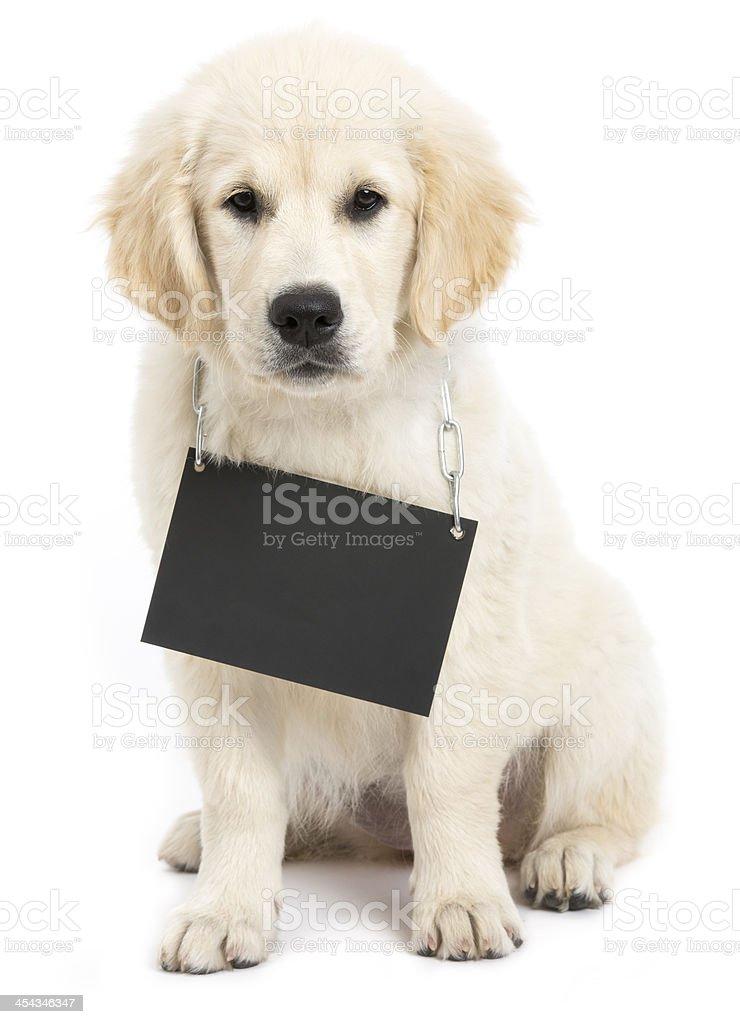 dog cardboard neutral royalty-free stock photo