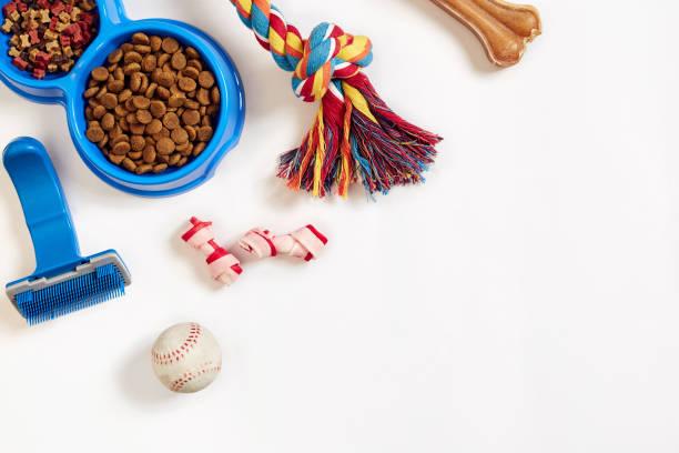 Dog care items isolated on white background dry pet food in bowl toy picture id876583334?b=1&k=6&m=876583334&s=612x612&w=0&h=utu35pjsui2zw7lbkav1nw6rpfavxbe1zcocn4hqkj0=