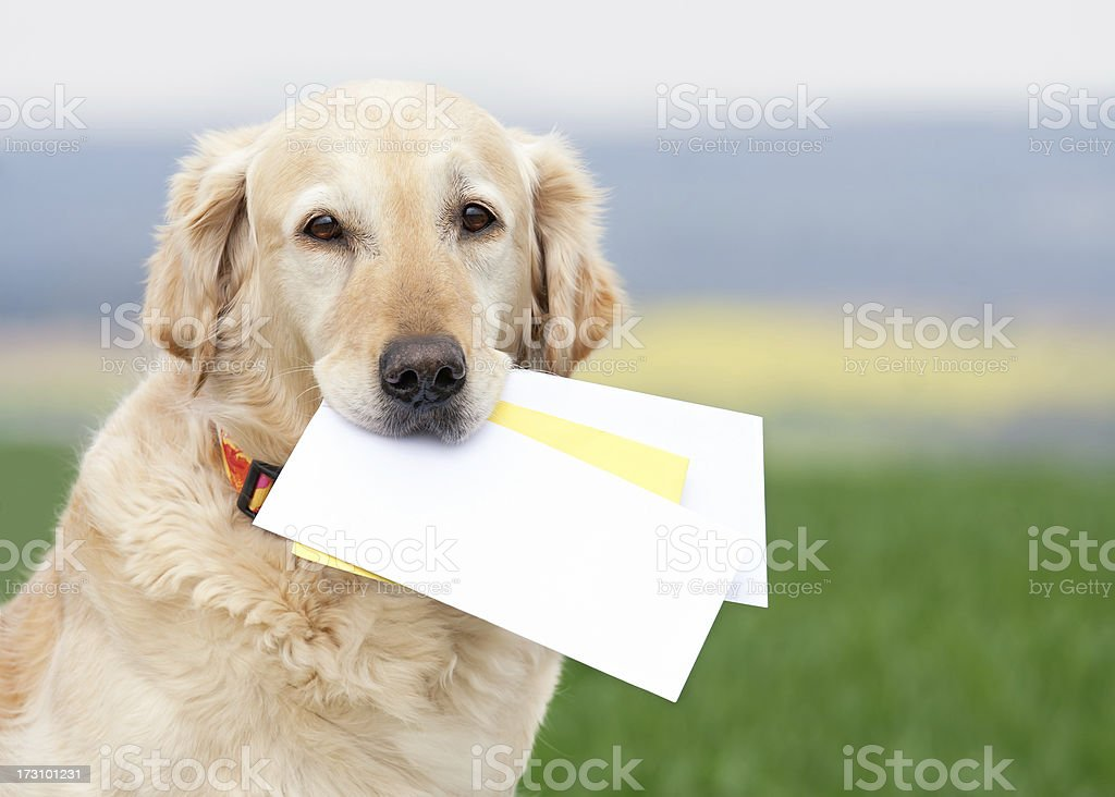 Dog carrying letters royalty-free stock photo