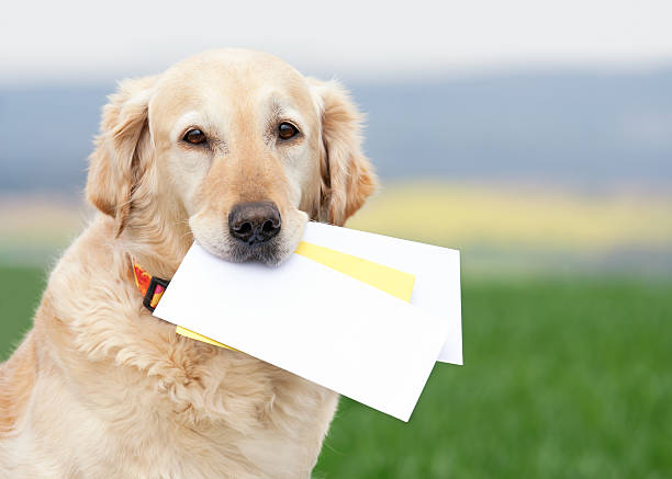 Dog carrying letters stock photo