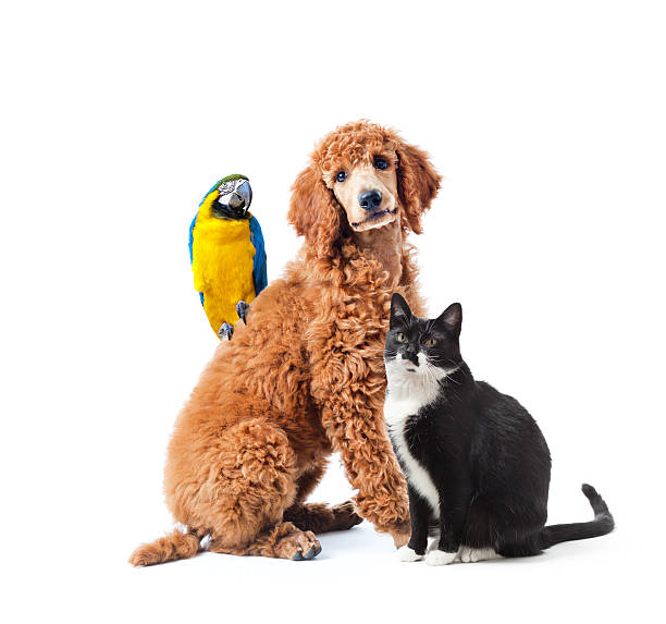 Dog cat and bird parrot pet isolated on white background picture id469909912?b=1&k=6&m=469909912&s=612x612&w=0&h=lxd7b23ss2eabv7ckuefwhrbl3thqhhkmzgr1vfemns=