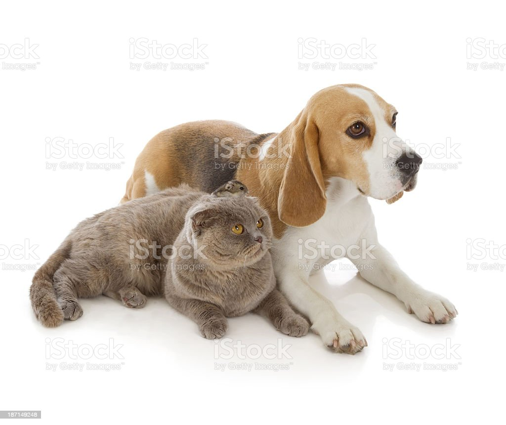 hund katze und maus stockfoto und mehr bilder von  hund katze und maus in szene gesetzt #3