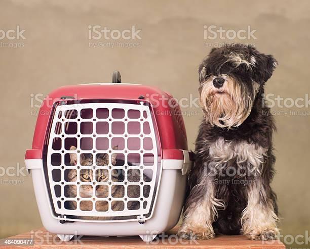 Dog cat and pet carrier picture id464090477?b=1&k=6&m=464090477&s=612x612&h=stfpkg7z45jpj33v6e8fas93hse73dueukmehxrfjqq=