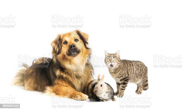 Dog cat and rabbit in studio with white background picture id685685202?b=1&k=6&m=685685202&s=612x612&h=vzz6hcazy5c7ozpuvacy9lntiqzzxwnyfily10g2dpa=