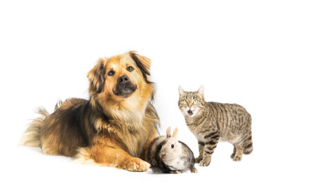 Dog, cat and rabbit in studio with white background stock photo