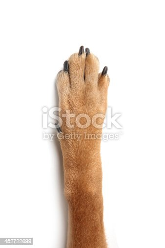 dog cat human hand