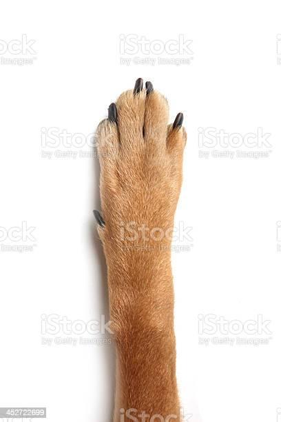 Dog cat human hand picture id452722699?b=1&k=6&m=452722699&s=612x612&h=0mkmmzasl449cfjaw8smjayi36ocmsqy1 g4bwctqk0=