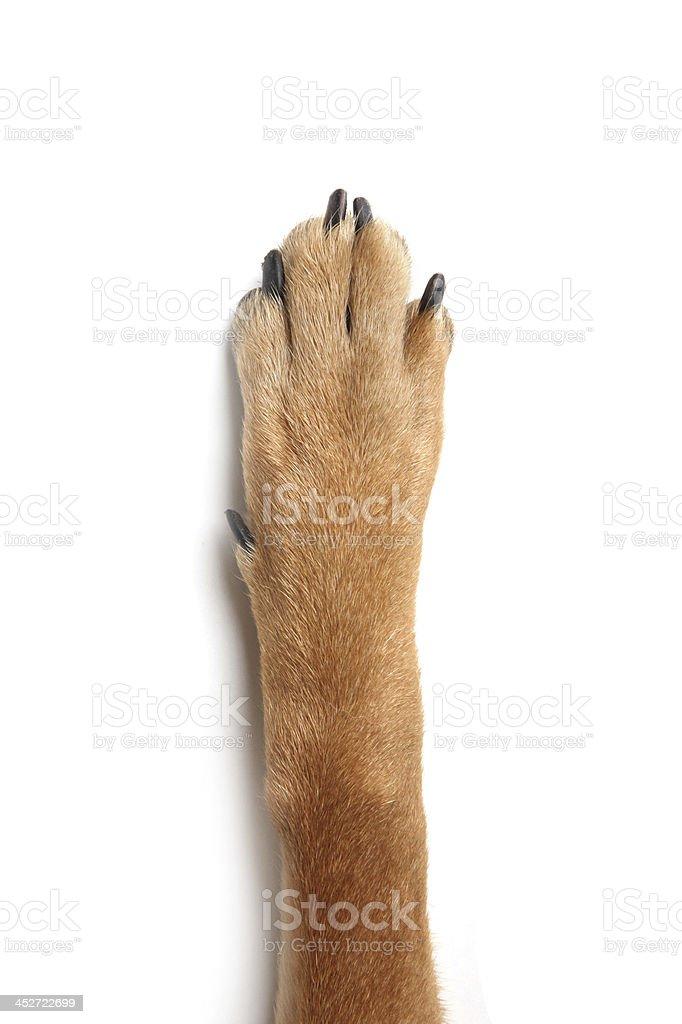 dog cat human hand stock photo