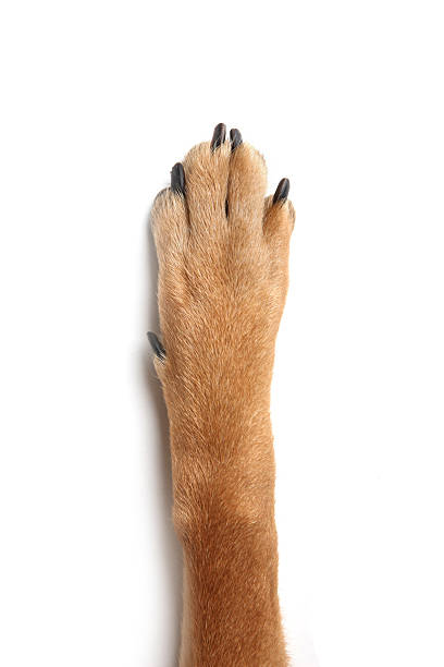dog cat human hand dog cat human hand animal hand stock pictures, royalty-free photos & images