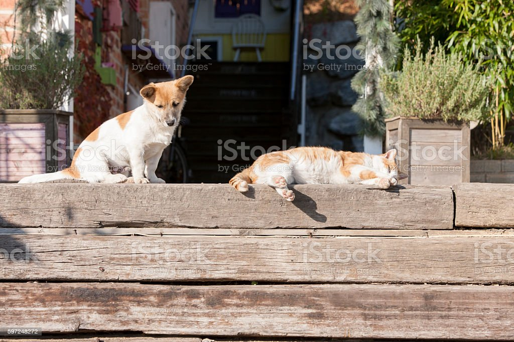 dog, cat stock photo