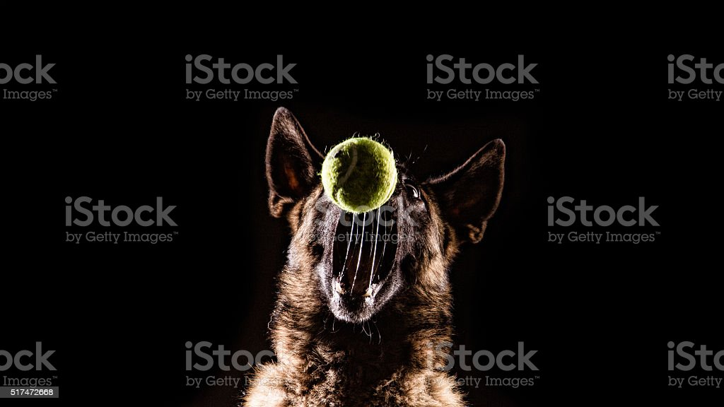 Dog Catching a ball stock photo