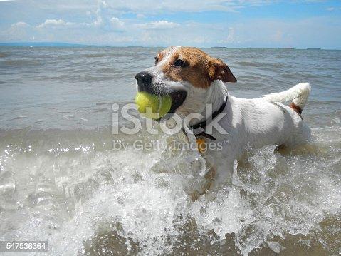 Beach, sand, nature, dog, Jack Russell Terrier, tennis ball.
