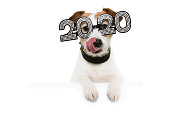 istock dog celebrating new year linking its lips with paws over  a white blank  wearing  glasses with the text 2020 on a white background 1188698274