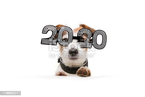 istock dog celebrating new year with paws over  a white blank  wearing  glasses with the text 2020 on a white background 1188602271