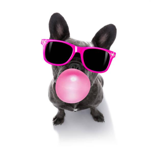 Hund Kaugummi Kaugummi – Foto
