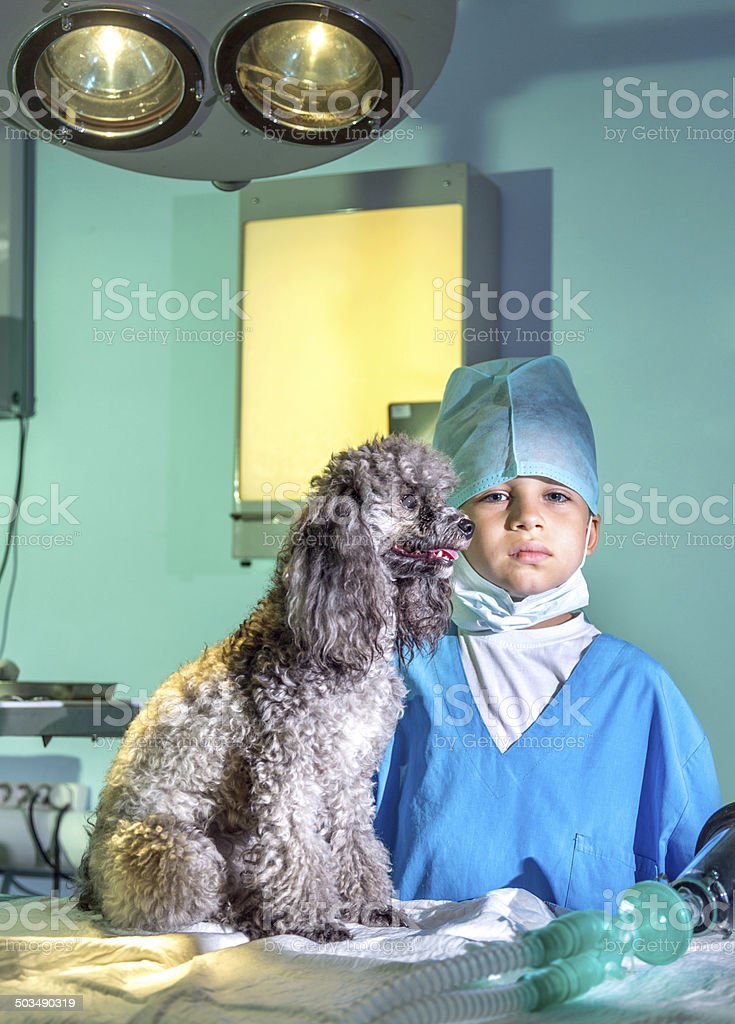 Dog choice royalty-free stock photo