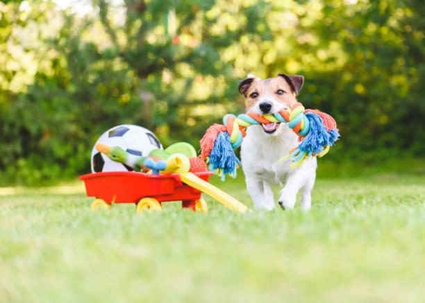de hond kiest en haalt koord stuk speelgoed van hamster van huisdieren speelgoed in kar - hondenkluif stockfoto's en -beelden