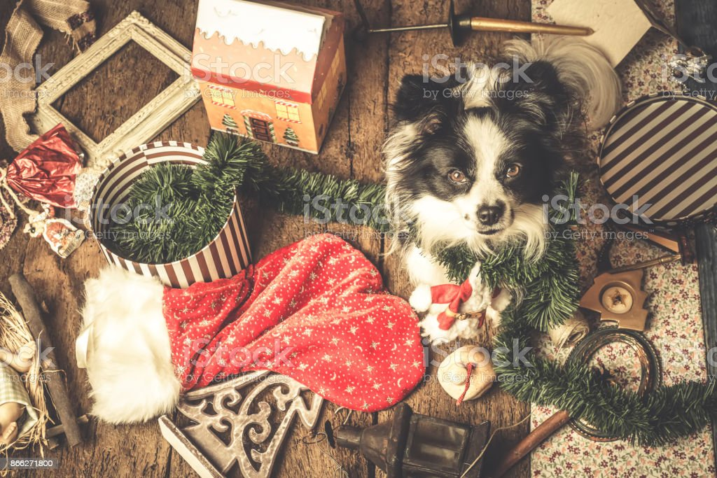 Dog Christmas Cards.Dog Christmas Cards Naughty Puppy Stock Photo Download Image Now