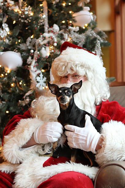 Dog Christmas stock photo