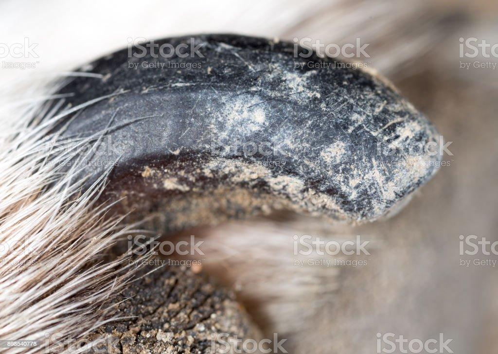 dog claws. macro stock photo