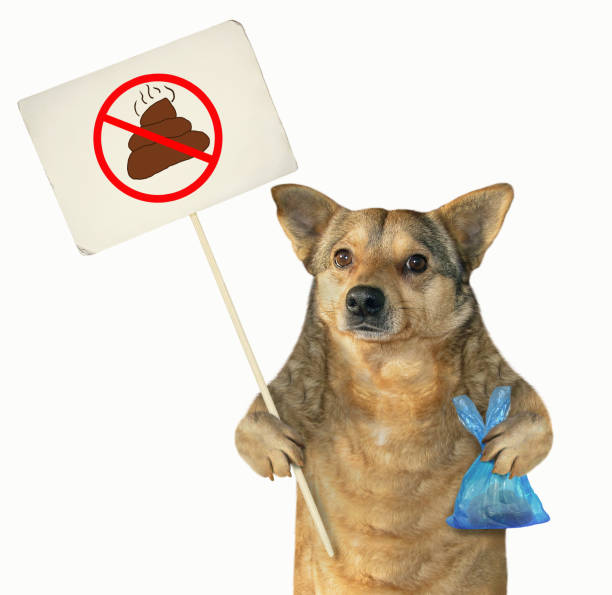 Dog cleaned up its poop stock photo
