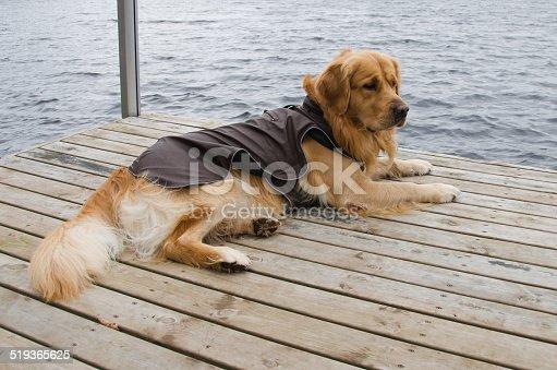 istock Dog clothing 519365625