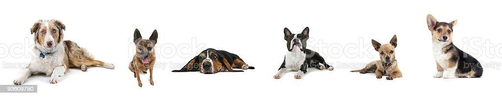 dog collage royalty-free stock photo