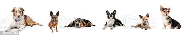 Dog collage picture id93609790?b=1&k=6&m=93609790&s=612x612&h=  ahvoruddmmnyhxqorel4wewr9ddosj dtirvs62gc=