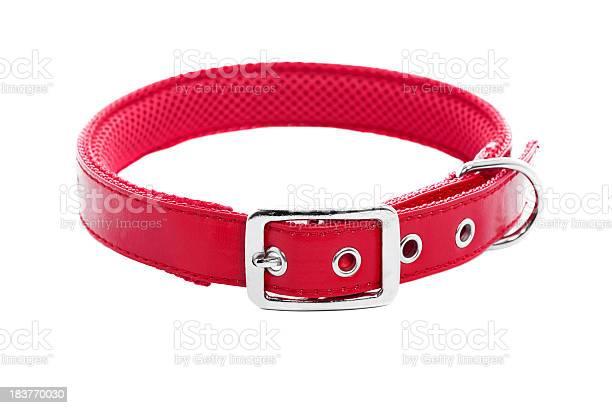 Dog collar picture id183770030?b=1&k=6&m=183770030&s=612x612&h=4q71eddu70c0sfsrpnkx3ekpnajefe5si l1wdnlhtc=