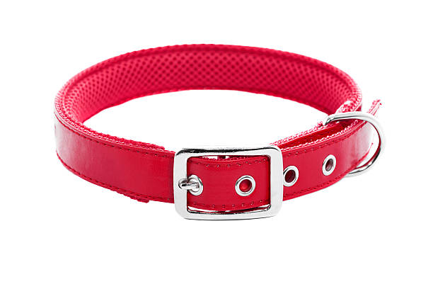 Dog Collar Dog collar on isolated white background XXXLMy other pets images collar stock pictures, royalty-free photos & images