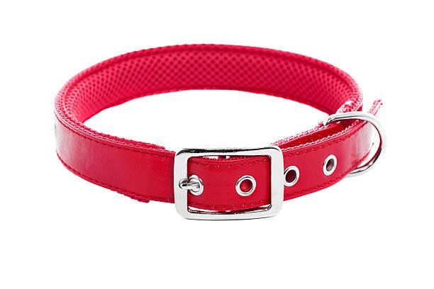 hundehalsband - halsband stock-fotos und bilder