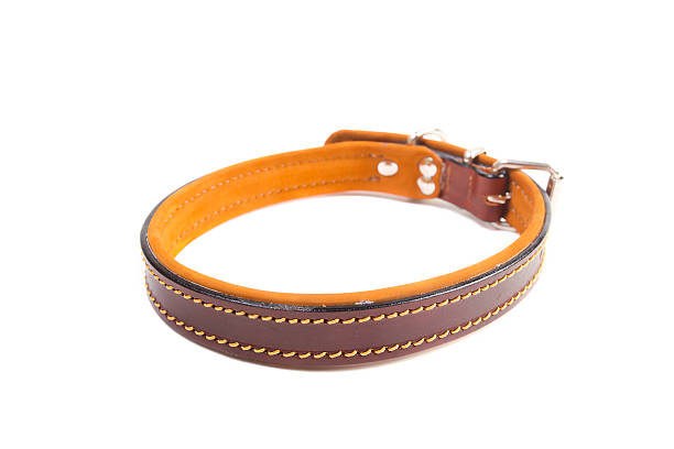 Dog Collar stock photo