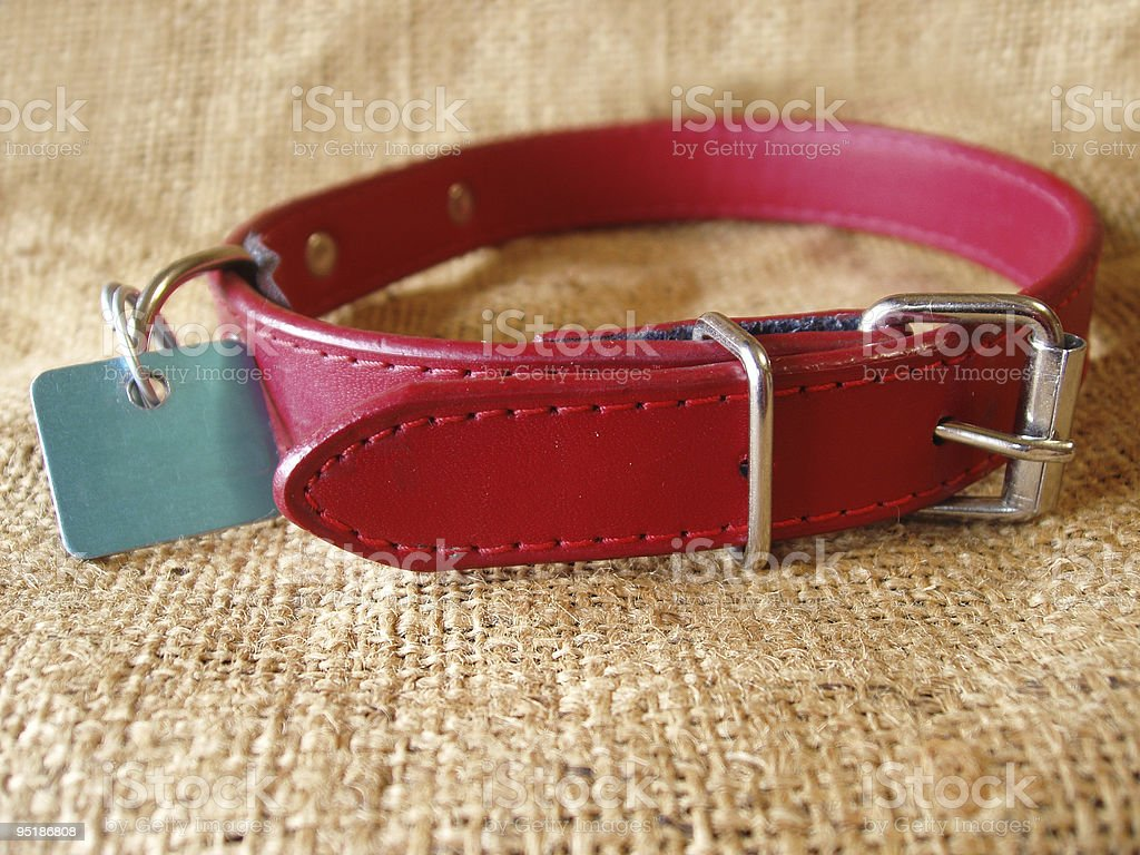 dog collar stock photo