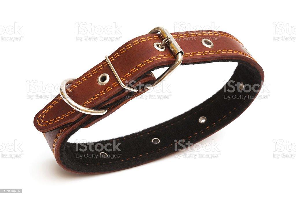 dog collar royalty-free stock photo