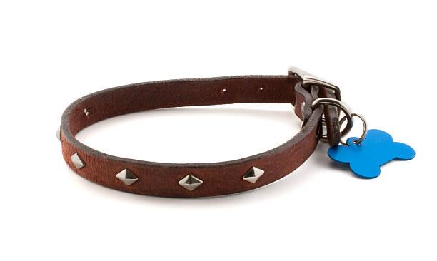 hundehalsband mit leeren hundemarke - halsband stock-fotos und bilder