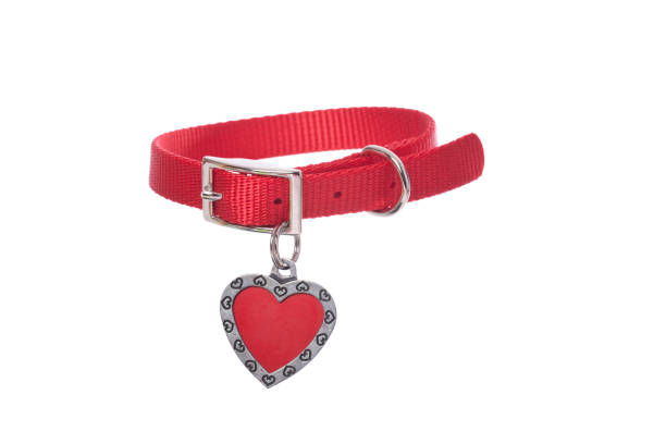Dog Collar with Tag Red dog collar with heart shaped tag on white.PLEASE CLICK ON THE IMAGE BELOW TO SEE MY DOGGY LIGHTBOX PORTFOLIO: collar stock pictures, royalty-free photos & images