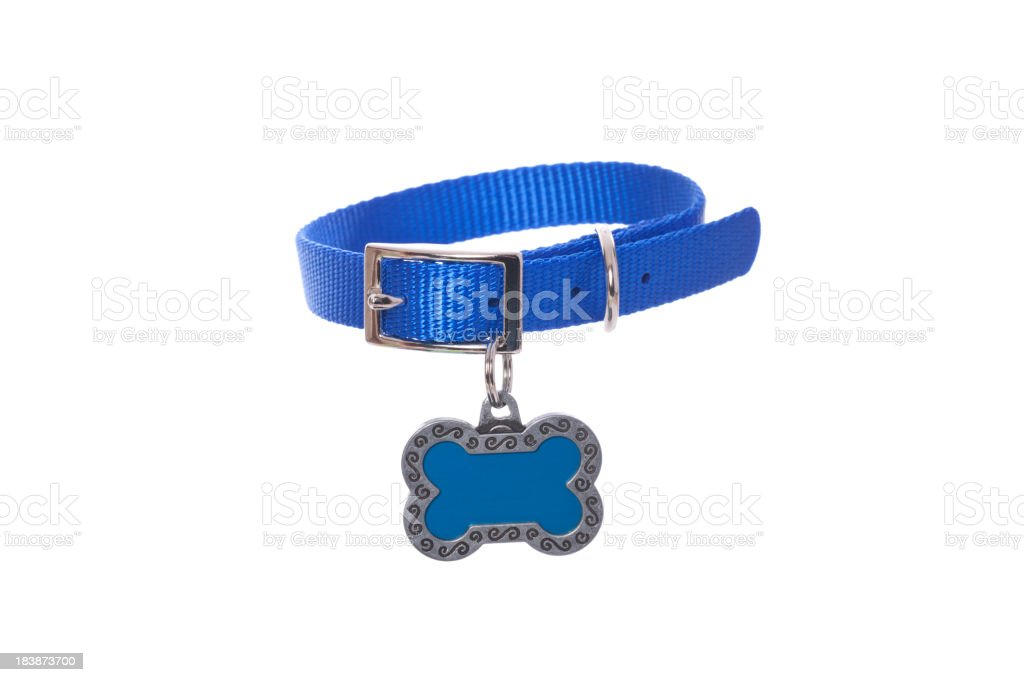 Dog Collar with Tag stock photo