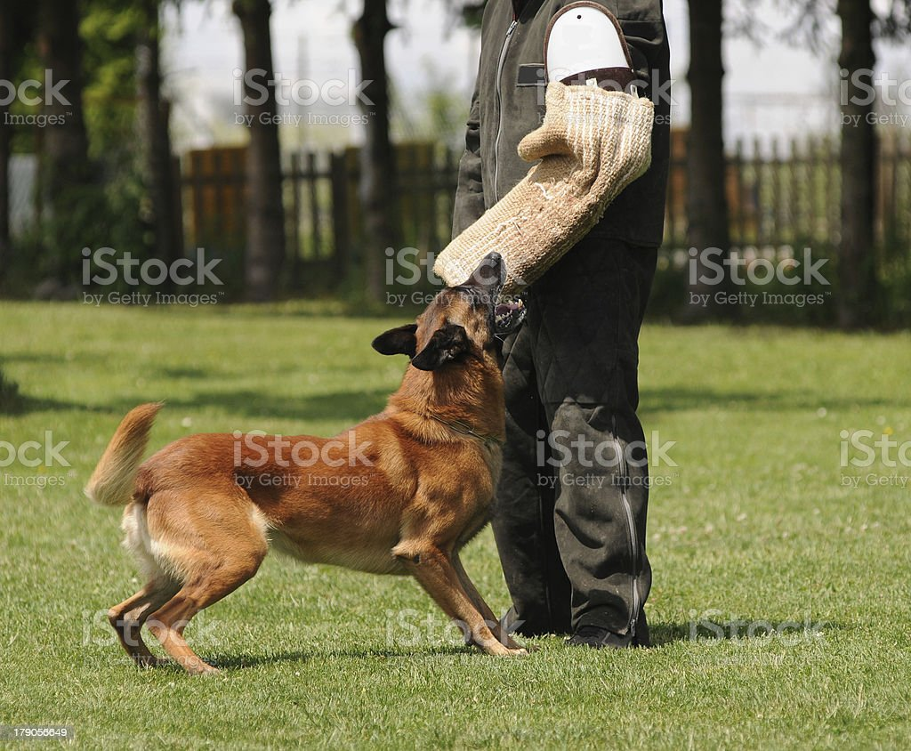 dog competition royalty-free stock photo