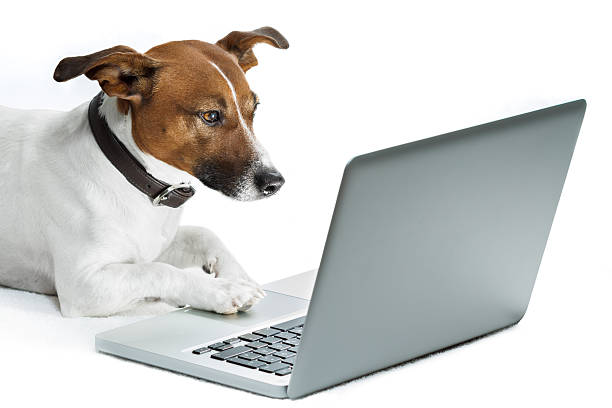 Dog computer picture id142306971?b=1&k=6&m=142306971&s=612x612&w=0&h=alas agfqdnmmfgagjrtfjvcilkel8ve5vqaskkck w=