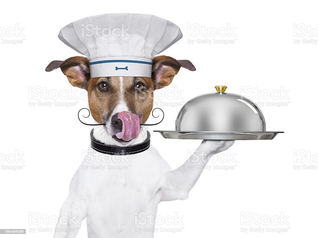 dog cook chef royalty-free stock photo