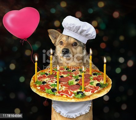 istock Dog cook with birthday pizza 1178164594
