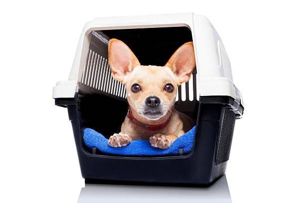 hund holzkiste kiste - hunde träger stock-fotos und bilder
