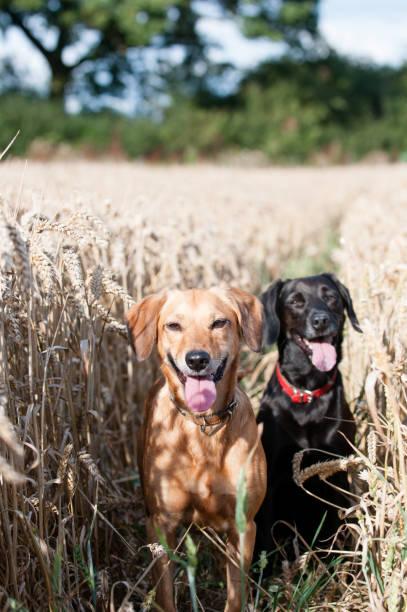 Hundetage im Sommer – Foto
