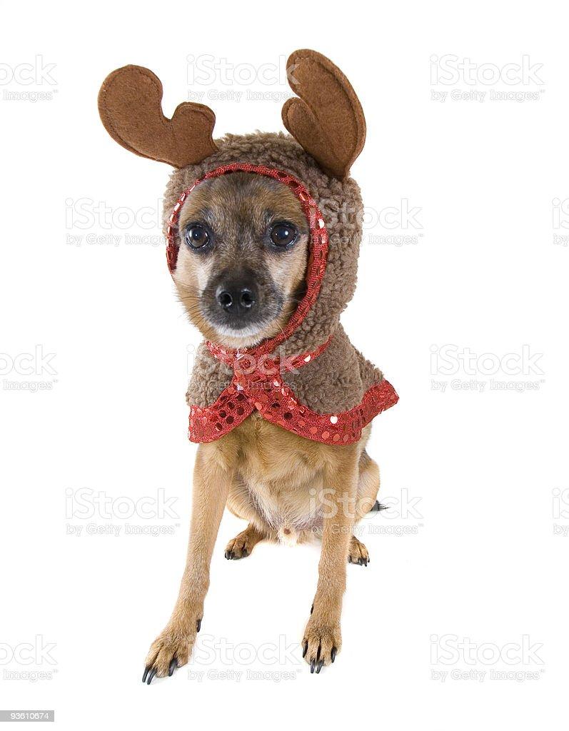 dog deer royalty-free stock photo