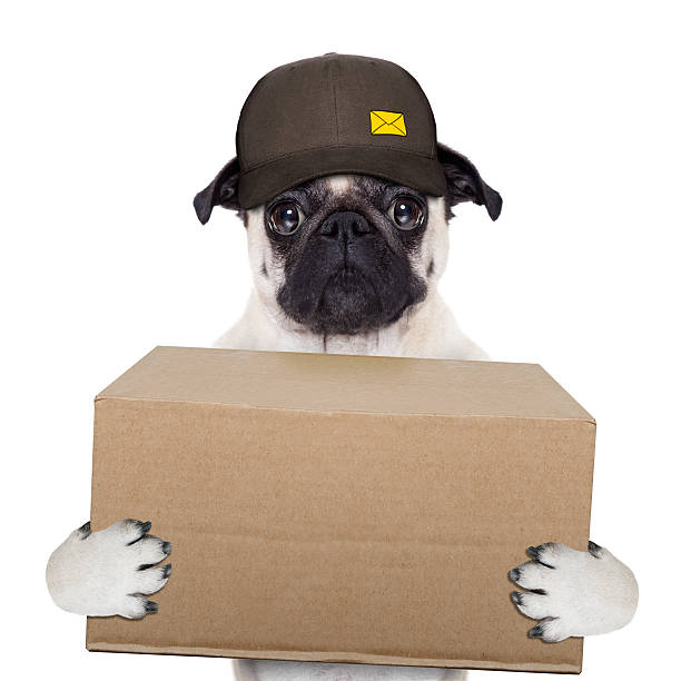 Best Mailman Funny Stock Photos, Pictures & Royalty-Free