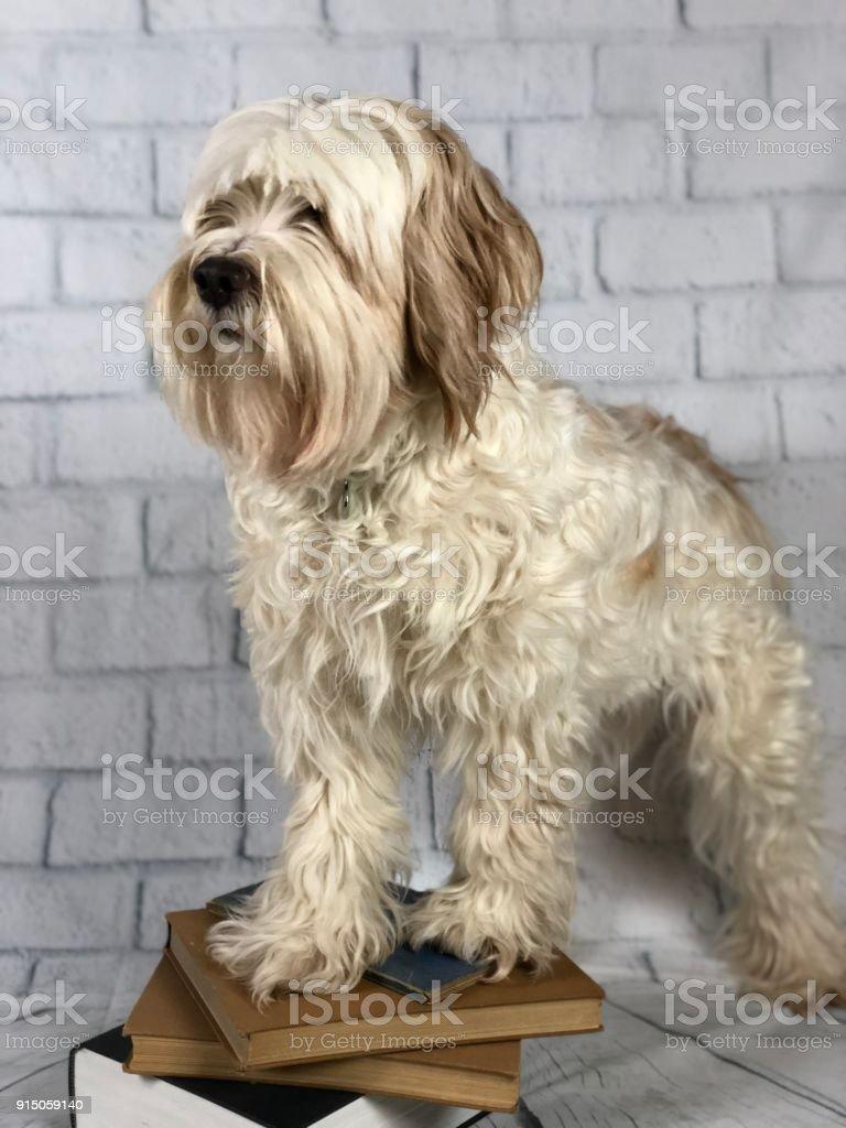 Dog desk stock photo