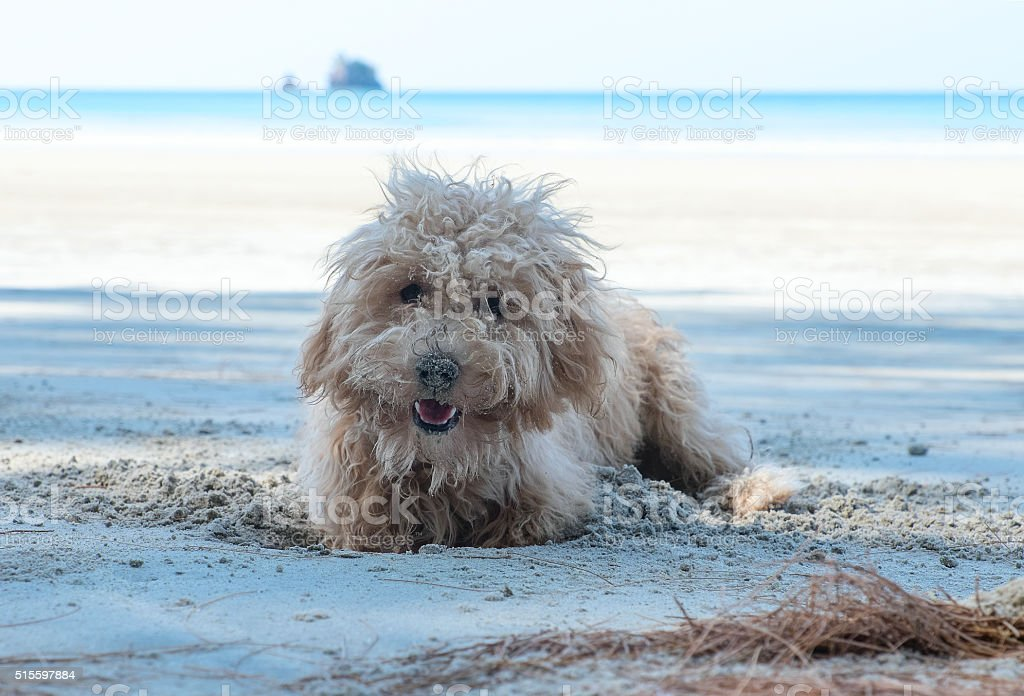 Dog dig holes in the sand stock photo